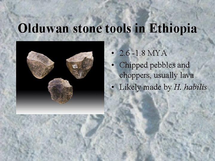 Olduwan stone tools in Ethiopia • 2. 6 -1. 8 MYA • Chipped pebbles