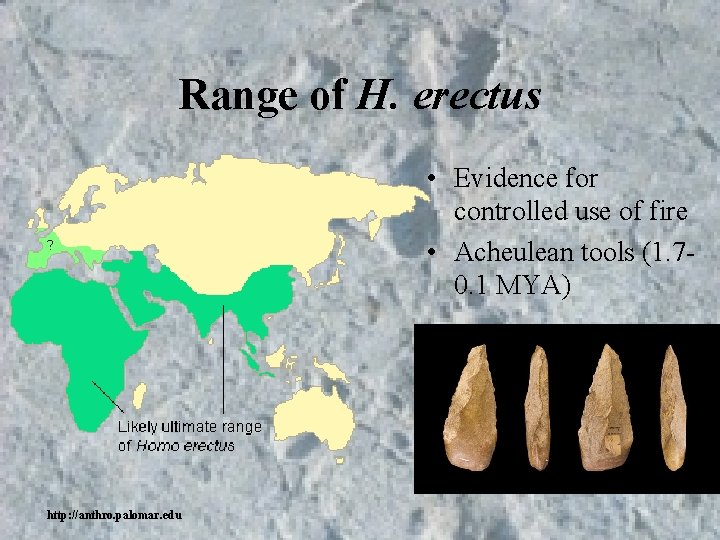Range of H. erectus • Evidence for controlled use of fire • Acheulean tools
