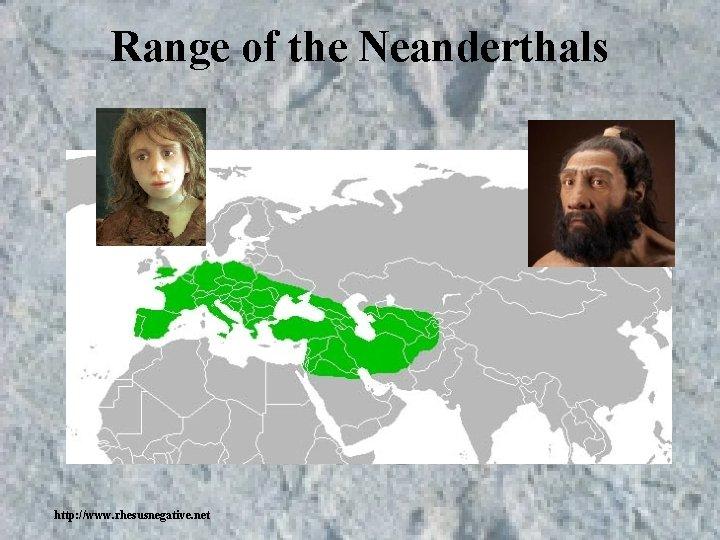 Range of the Neanderthals http: //www. rhesusnegative. net