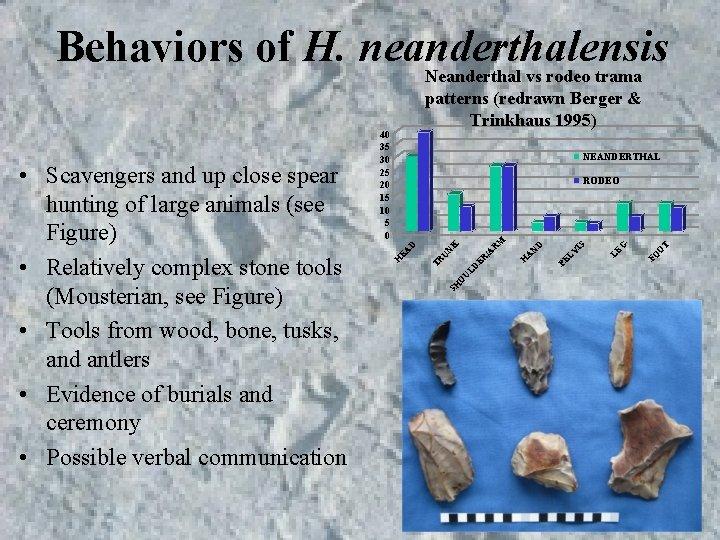 Behaviors of H. neanderthalensis Neanderthal vs rodeo trama 40 35 30 25 20 15