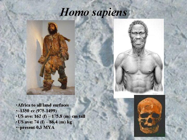 Homo sapiens • Africa to all land surfaces • ~1350 cc (975 -1499) •