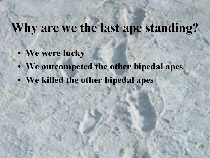 Why are we the last ape standing? • We were lucky • We outcompeted