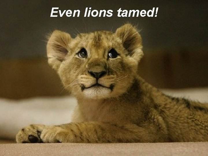 Even lions tamed!