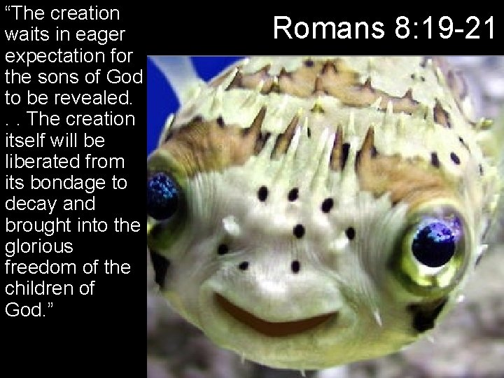"""""""The creation waits in eager expectation for the sons of God to be revealed."""