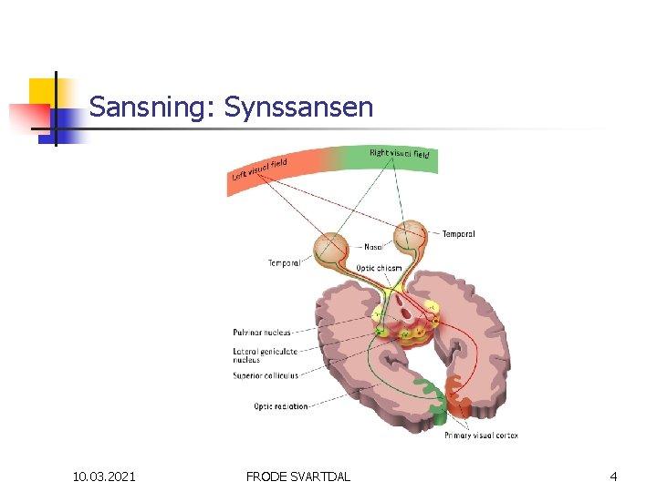 Sansning: Synssansen 10. 03. 2021 FRODE SVARTDAL 4