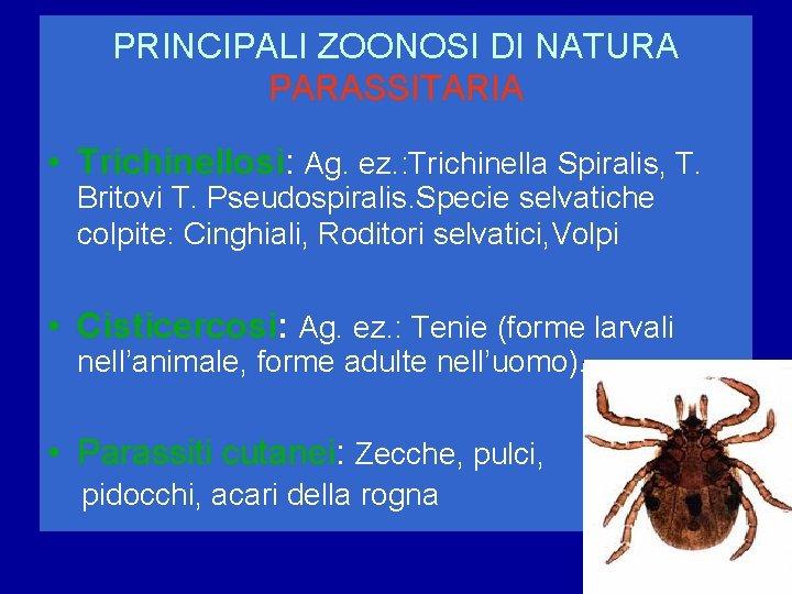 PRINCIPALI ZOONOSI DI NATURA PARASSITARIA • Trichinellosi: Ag. ez. : Trichinella Spiralis, T. Britovi