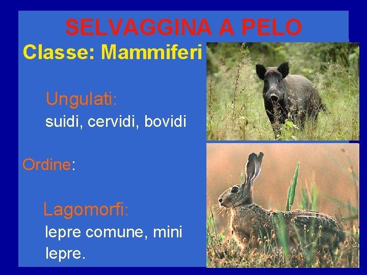 SELVAGGINA A PELO Classe: Mammiferi Ungulati: suidi, cervidi, bovidi Ordine: Lagomorfi: lepre comune, mini
