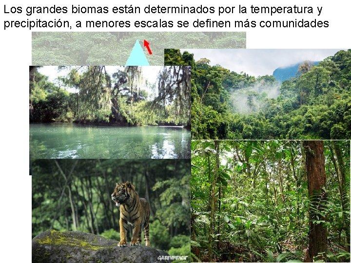 Los grandes biomas están determinados por la temperatura y precipitación, a menores escalas se