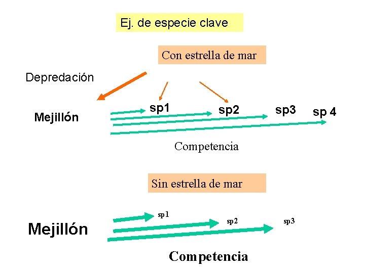 Ej. de especie clave Con estrella de mar Depredación Mejillón sp 1 sp 2