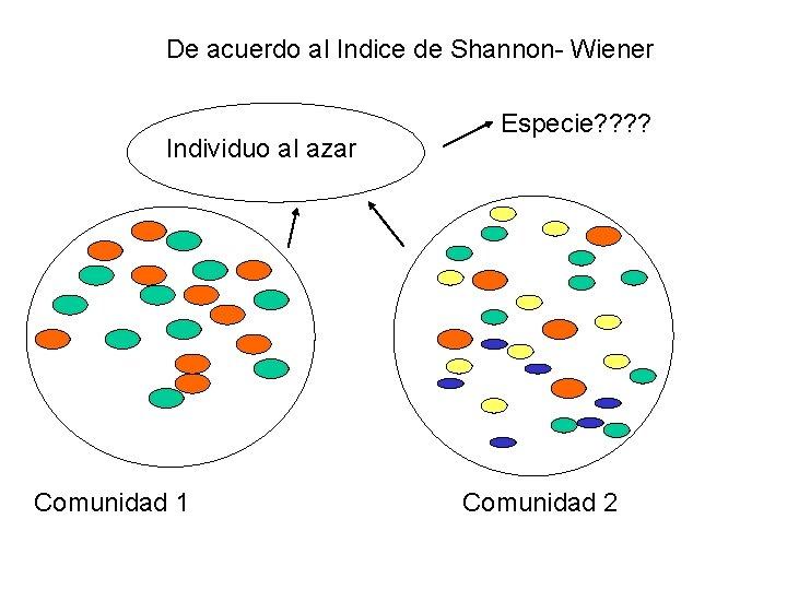 De acuerdo al Indice de Shannon- Wiener Individuo al azar Comunidad 1 Especie? ?