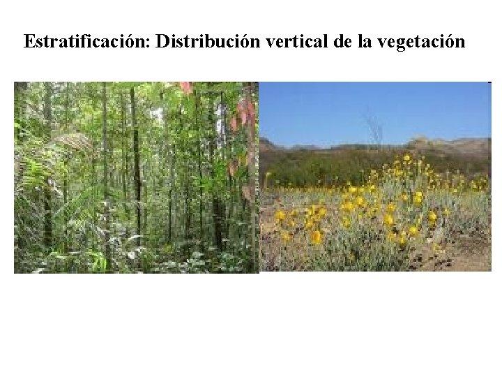 Estratificación: Distribución vertical de la vegetación