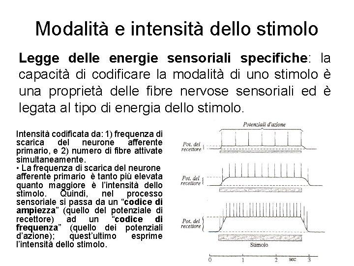 Modalità e intensità dello stimolo Legge delle energie sensoriali specifiche: la capacità di codificare
