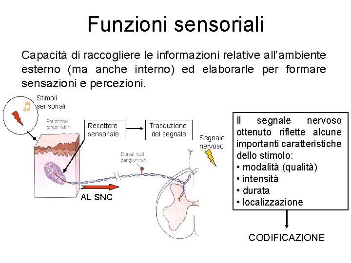 Funzioni sensoriali Capacità di raccogliere le informazioni relative all'ambiente esterno (ma anche interno) ed