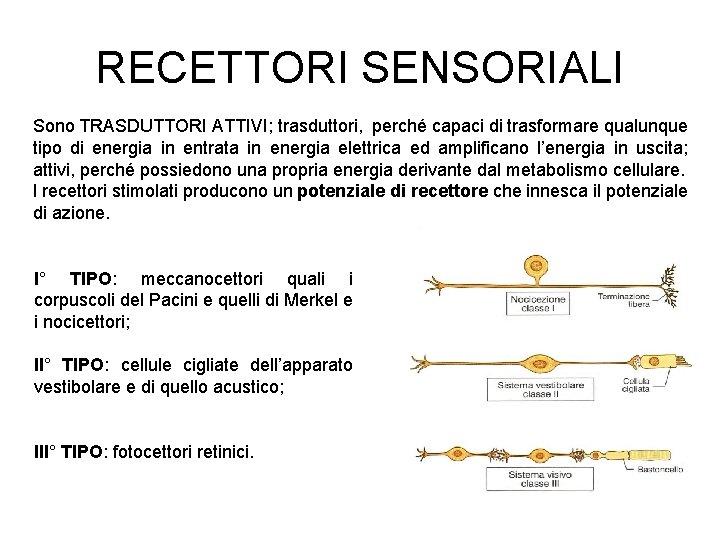 RECETTORI SENSORIALI Sono TRASDUTTORI ATTIVI; trasduttori, perché capaci di trasformare qualunque tipo di energia