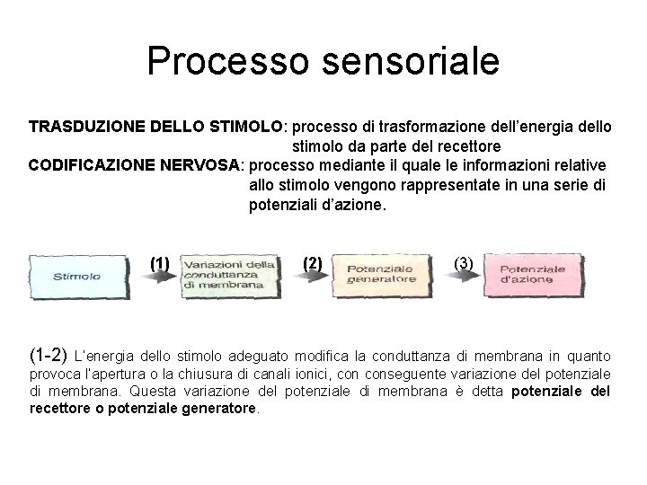 Processo sensoriale TRASDUZIONE DELLO STIMOLO: processo di trasformazione dell'energia dello stimolo da parte del