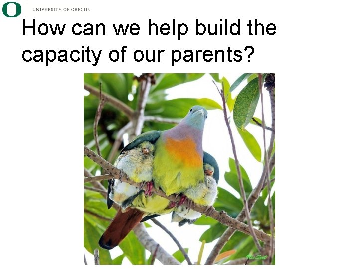 How can we help build the capacity of our parents?
