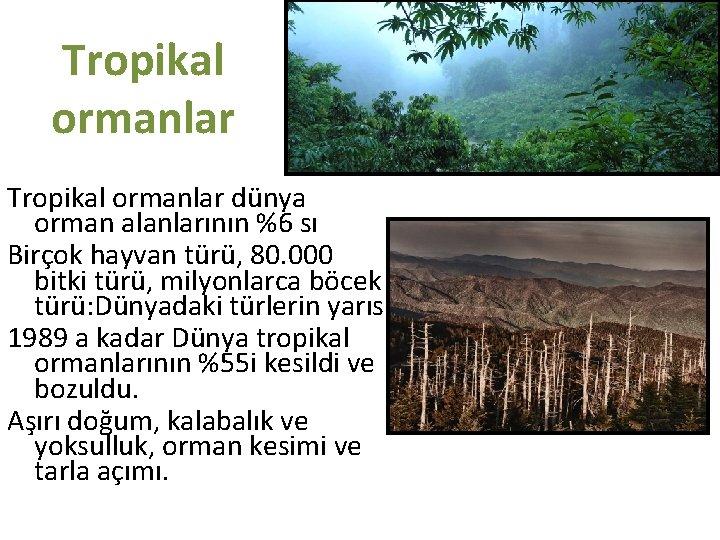 Tropikal ormanlar dünya orman alanlarının %6 sı Birçok hayvan türü, 80. 000 bitki türü,