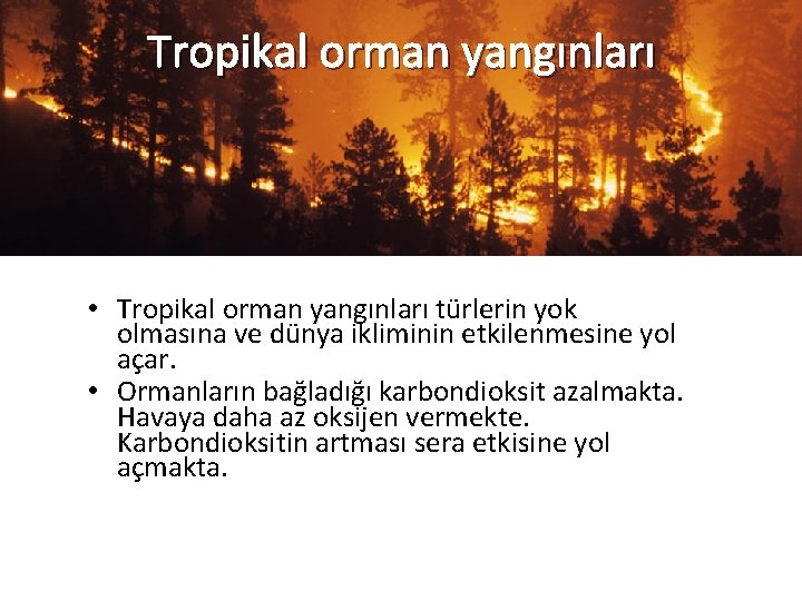Tropikal orman yangınları • Tropikal orman yangınları türlerin yok olmasına ve dünya ikliminin etkilenmesine