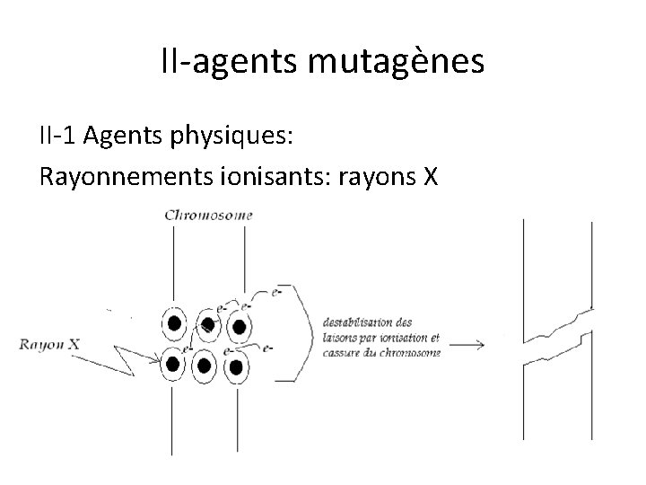 II-agents mutagènes II-1 Agents physiques: Rayonnements ionisants: rayons X