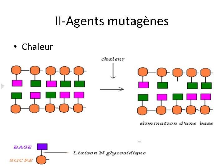 II-Agents mutagènes • Chaleur