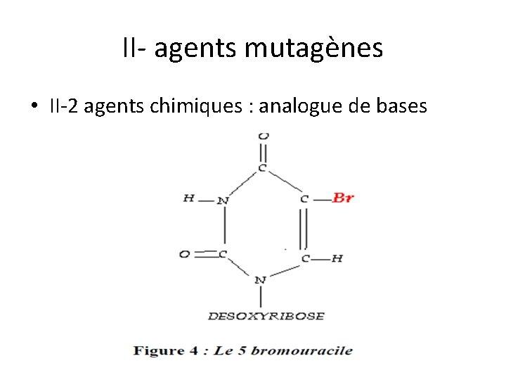II- agents mutagènes • II-2 agents chimiques : analogue de bases