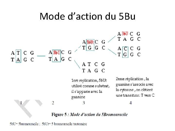 Mode d'action du 5 Bu