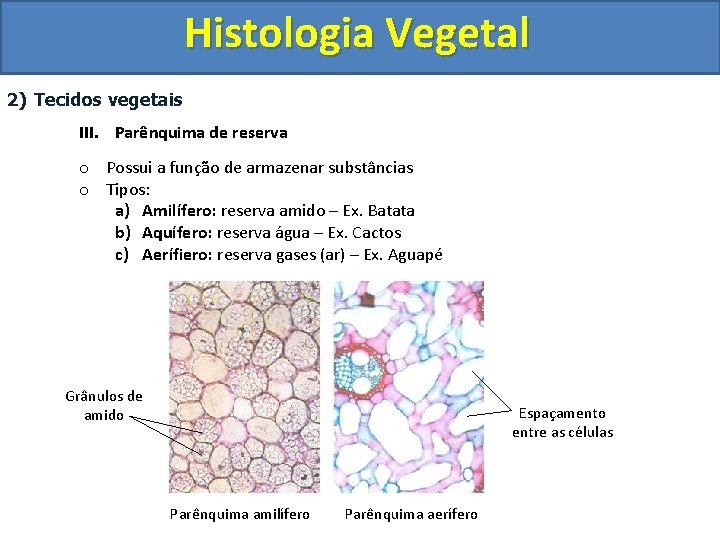 Histologia Vegetal 2) Tecidos vegetais III. Parênquima de reserva o Possui a função de