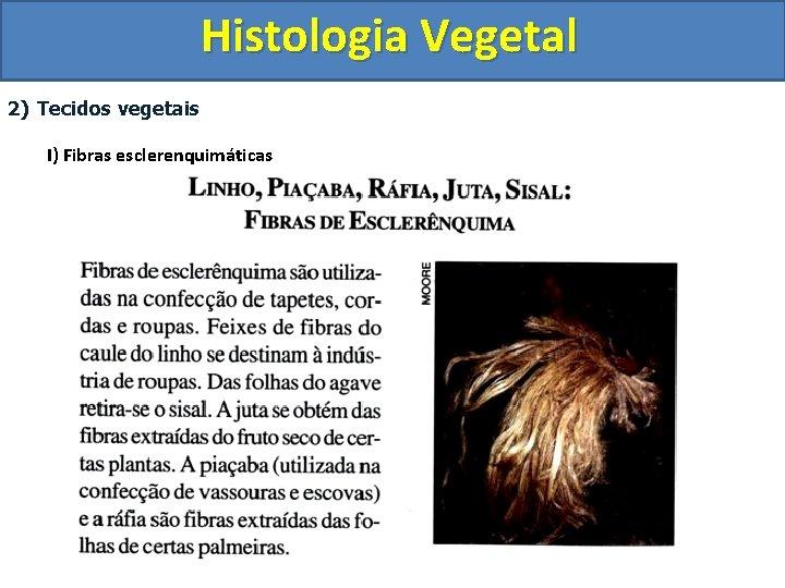 Histologia Vegetal 2) Tecidos vegetais I) Fibras esclerenquimáticas
