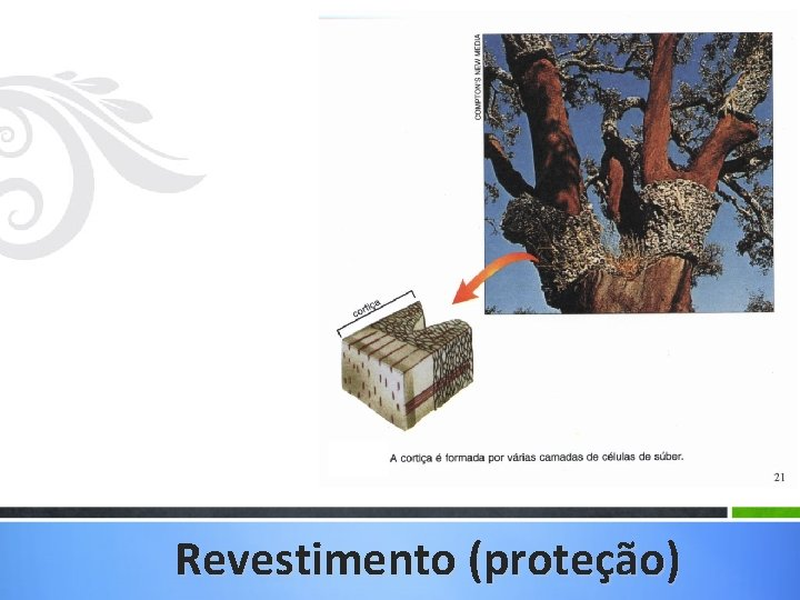 Revestimento (proteção)
