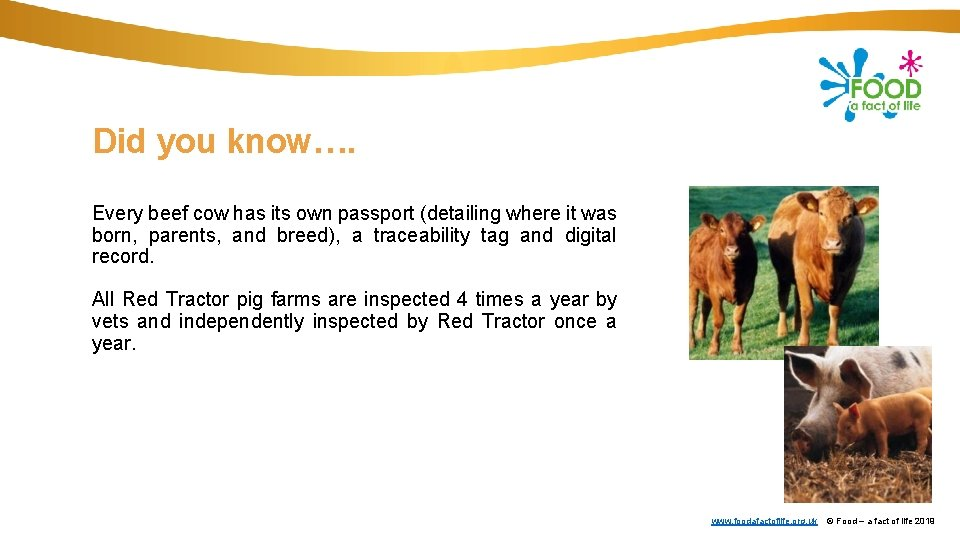Did you know…. Every beef cow has its own passport (detailing where it was