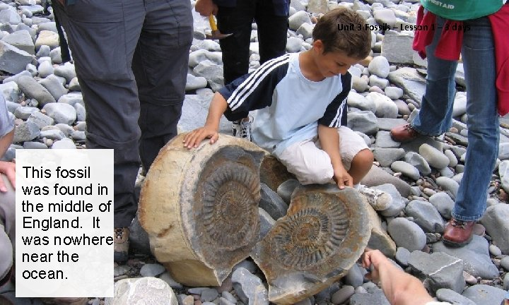 Unit 3 Fossils – Lesson 1 – 3 days This fossil was found in