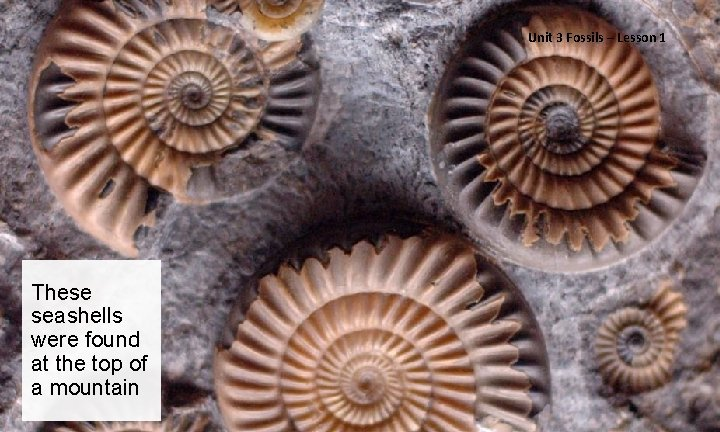 Unit 3 Fossils – Lesson 1 These seashells were found at the top of