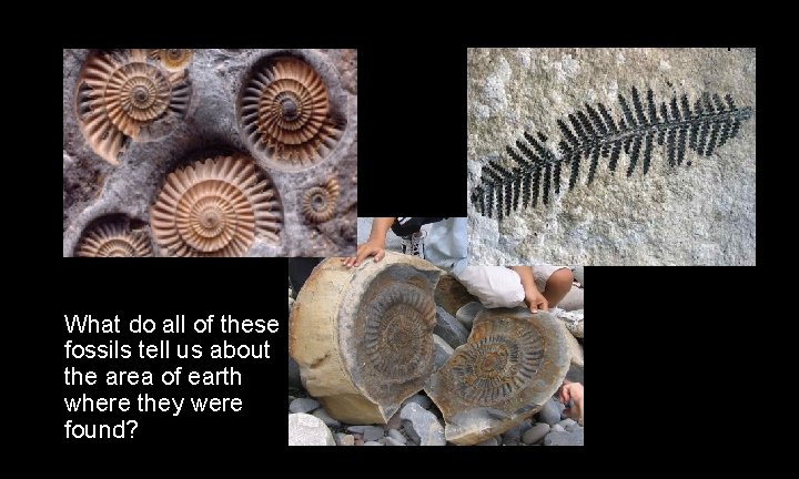 Unit 3 Fossils – Lesson 1 – 3 days What do all of these