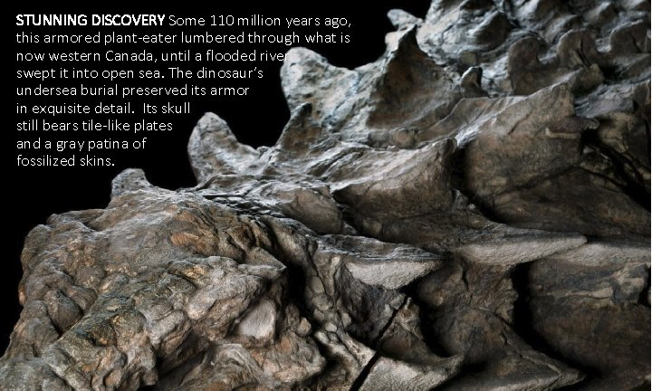 STUNNING DISCOVERY Some 110 million years ago, this armored plant-eater lumbered through what is