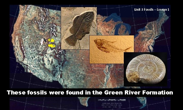 Unit 3 Fossils – Lesson 1 These fossils were found in the Green River