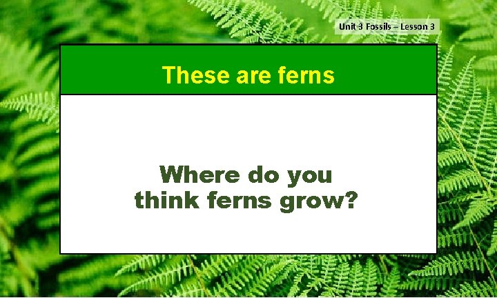 Unit 3 Fossils – Lesson 3 These are ferns Where do you think ferns