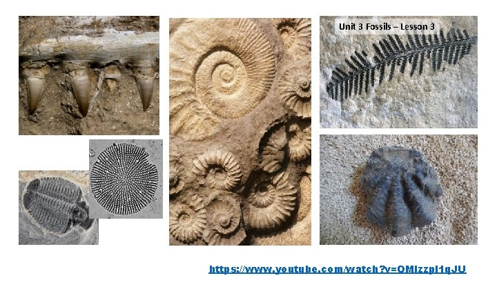 Unit 3 Fossils – Lesson 1 – 33 days Watch this video https: //www.