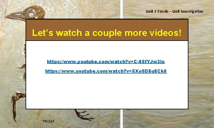 Unit 3 Fossils – Unit Investigation Let's watch a couple more videos! Isn't he