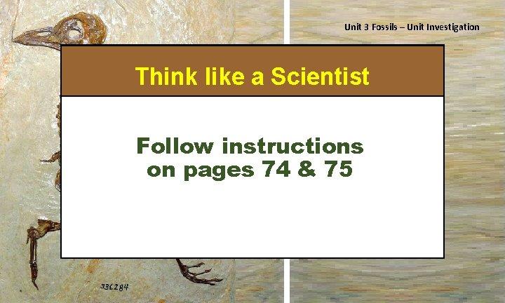 Unit 3 Fossils – Unit Investigation Think like a Scientist Isn't he cute? Follow