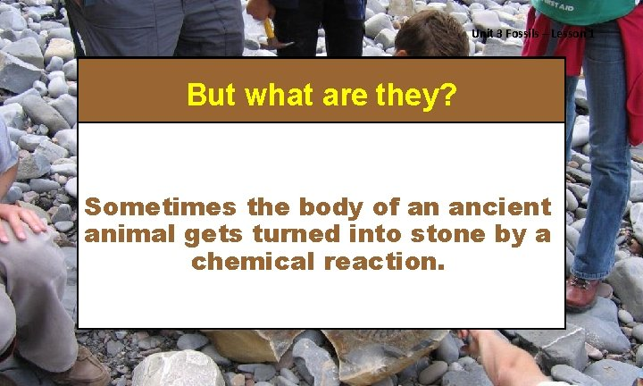 Unit 3 Fossils – Lesson 1 But what are they? Sometimes the body of