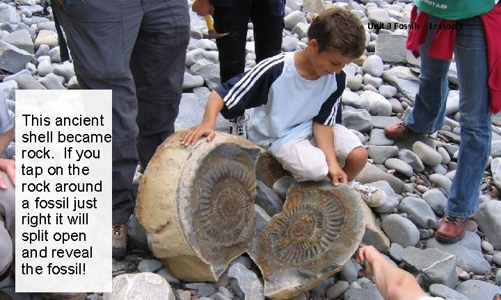 Unit 3 Fossils – Lesson 1 This ancient shell became rock. If you tap