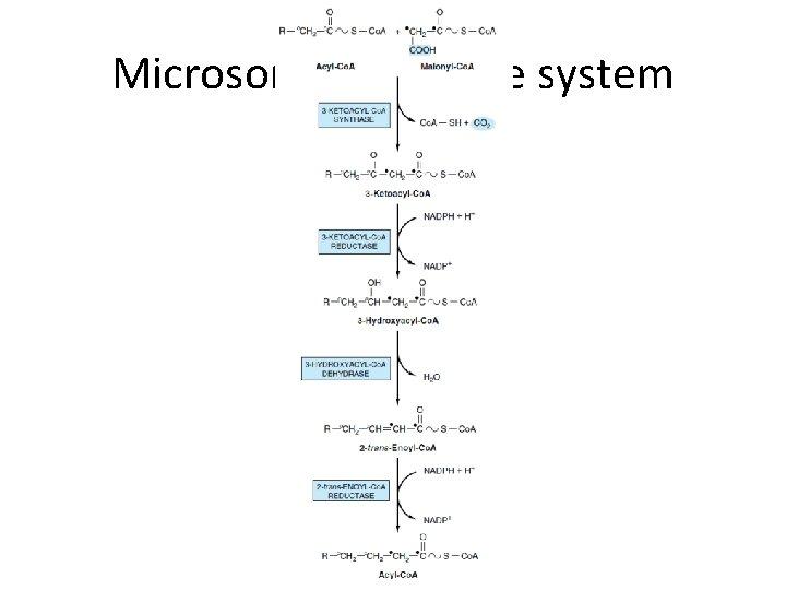 Microsomal elongase system