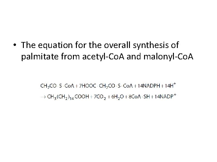 • The equation for the overall synthesis of palmitate from acetyl-Co. A and