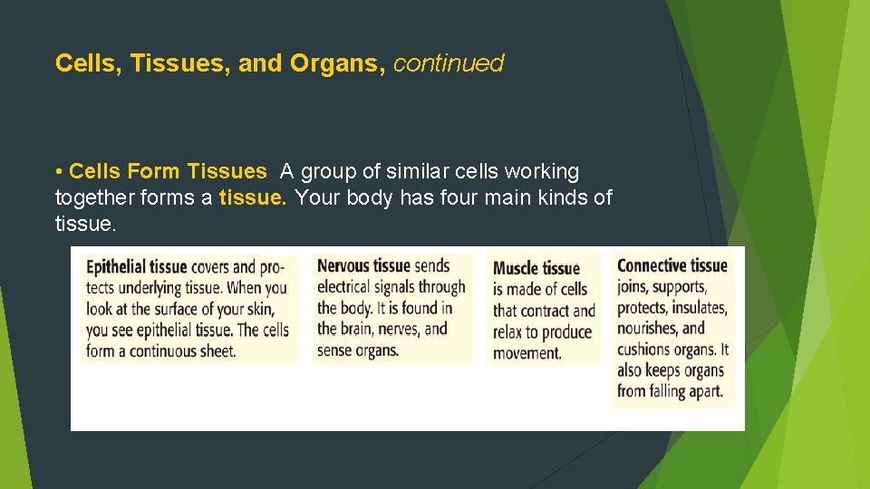 Cells, Tissues, and Organs, continued • Cells Form Tissues A group of similar cells