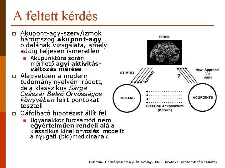 A feltett kérdés p Akupont-agy-szerv/izmok háromszög akupont-agy oldalának vizsgálata, amely addig teljesen ismeretlen n