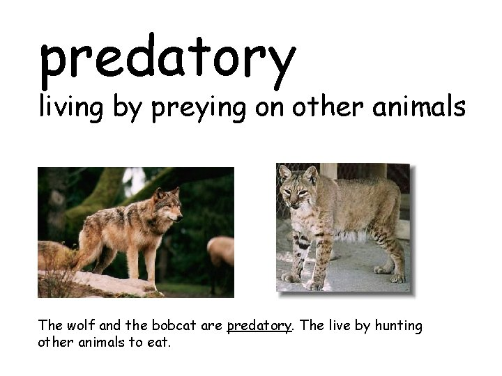 predatory living by preying on other animals The wolf and the bobcat are predatory.