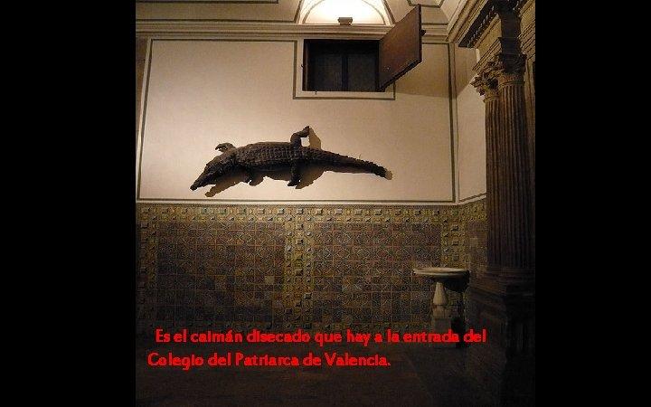 Es el caimán disecado que hay a la entrada del Colegio del Patriarca de