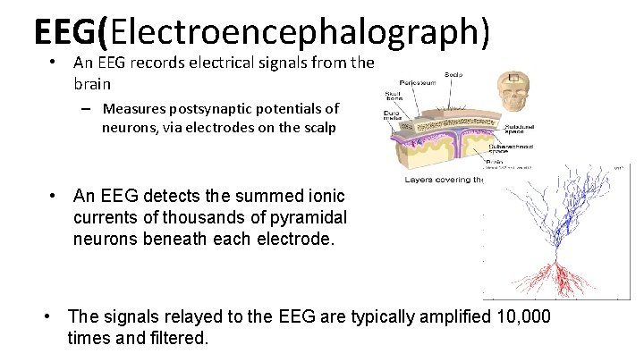 EEG(Electroencephalograph) • An EEG records electrical signals from the brain – Measures postsynaptic potentials