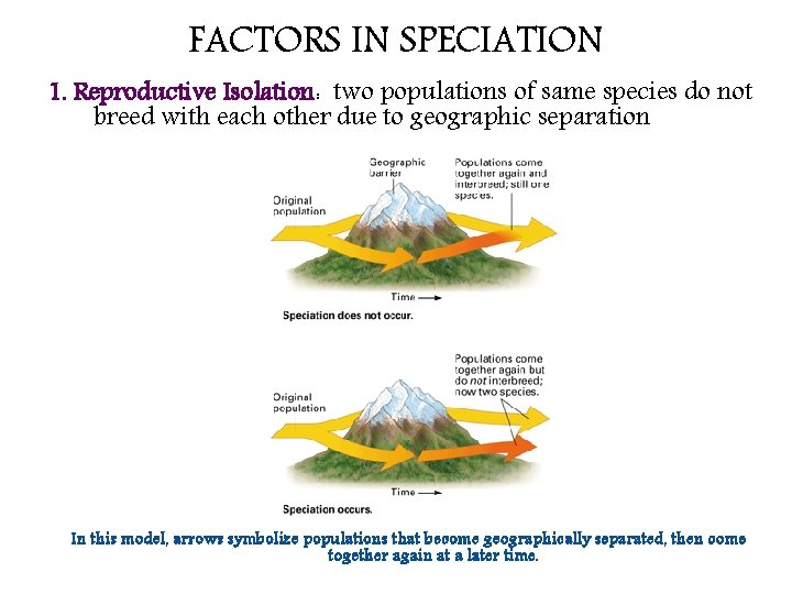 FACTORS IN SPECIATION 1. Reproductive Isolation: two populations of same species do not breed