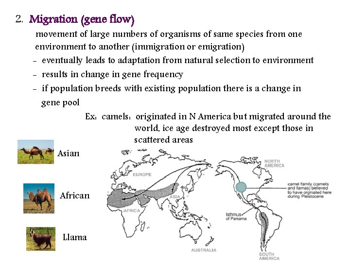 2. Migration (gene flow) movement of large numbers of organisms of same species from